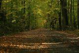 Jesienne fotografie lasów